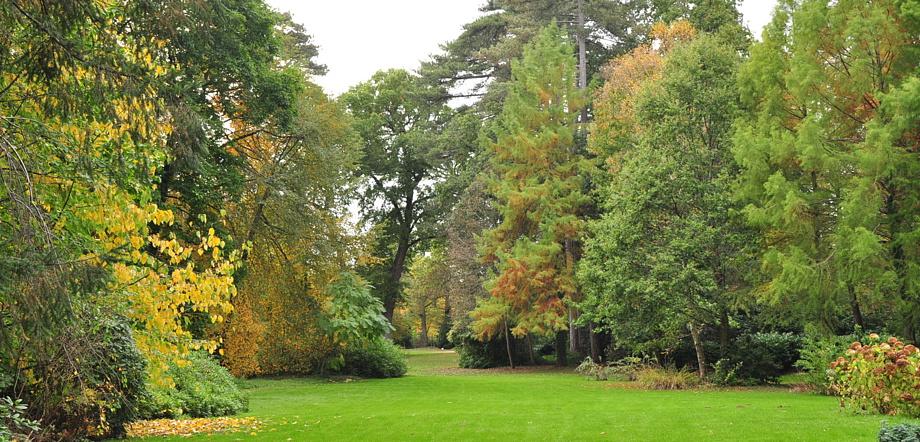 aménagement paysager, jardinage, arboretum